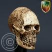 Cannibal Skull