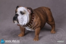 British Bulldog - Version C