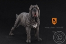 Neapolitan Mastiff - black-blue