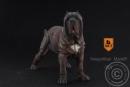 Neapolitan Mastiff - tabby