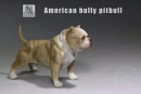 American Bully Dog - light color