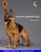German Shepherd Dog - A
