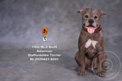 American Staffordshire Terrier - sitzend