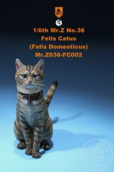 Katze - Felis Catus