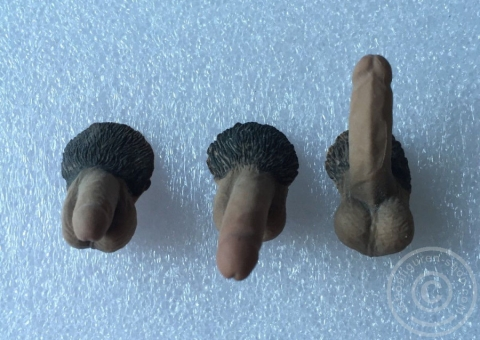 3 Genitals for Male Phicen Bodys