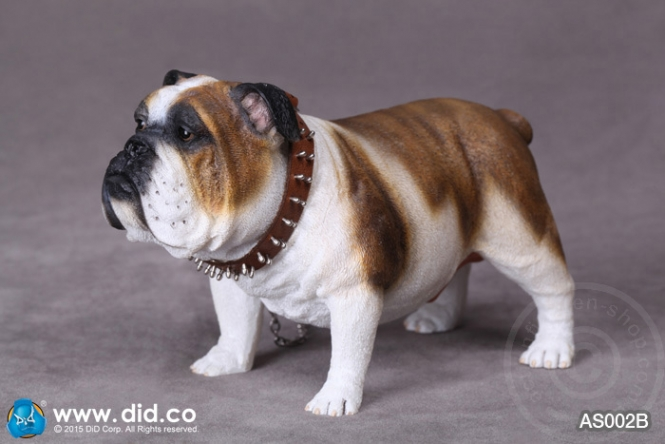 British Bulldog - Version B