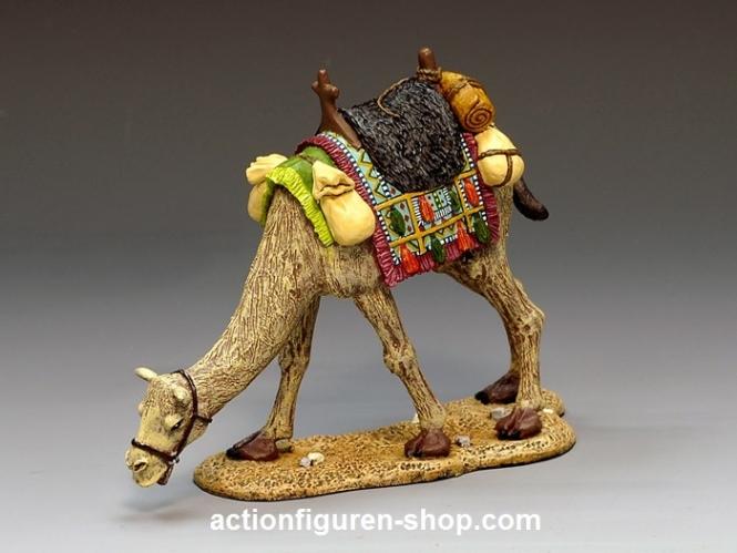 Grasendes Kamel