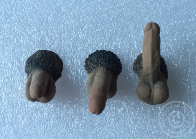3 Genitalien für männliche Phicen Körper