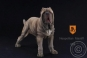 Neapolitan Mastiff - tan